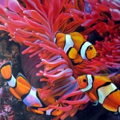 MEETING OF CLOWNFISH